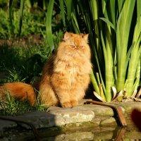 Солнечный кот :: Евгений Р