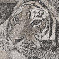 тигр :: Юлия Денискина