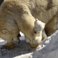Мамочка,как же я тебя люблю! :: Светлана Винокурова
