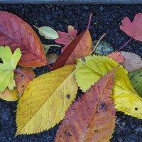 опавшие листья :: Ирина Сафонова