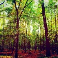 лес :: Елена Воронкова