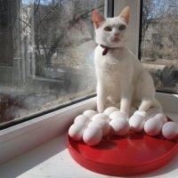 Прогноз на 1 апреля 2017 года: В Год Петуха главное - сохранить свои яйца! :: Алекс Аро Аро