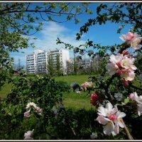 Весна приходит :: оксана косатенко