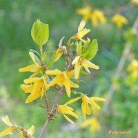 весна :: Нади часоК