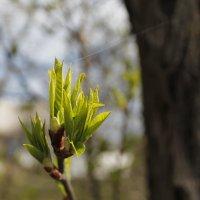 весна :: сергей мыряха