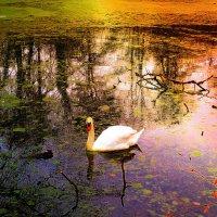 Лесное озеро. Лебедь :: Nina Yudicheva