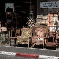 Кресло для Жучки :: Michael & Lydia Militinsky