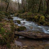 Чистые воды весеннего леса :: Александр Плеханов