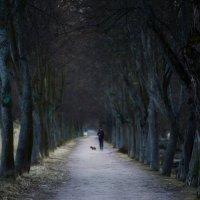 Прогулка.... :: Юрий Цыплятников