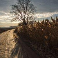 Поворот к солнцу :: Юрий Клишин