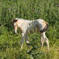 Жеребенок рыжей лошади ребенок :: Александр Деревяшкин