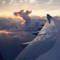 полет... :: кот ❤