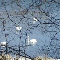 Весеннее озеро :: BoxerMak Mak