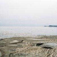 Куршский залив :: Саша Суфранс