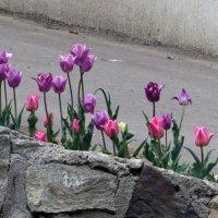 У нас весна! :: Наталья Джикидзе (Берёзина)