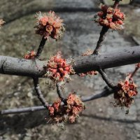 Весна пришла :: Александр Витебский