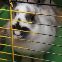 Задумчивый кролик :: Ксения Роянова
