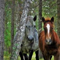 Пара в лесу :: Сергей Чиняев