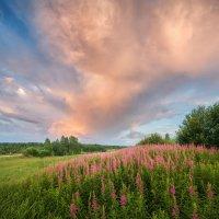 ....лето...небо...иван-чай..... :: Александр Кукринов