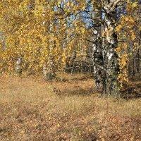Осень :: Елена Олейникова