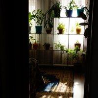 утреннее солнышко :: Наталия Сарана