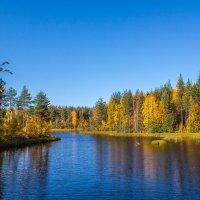 Золотая осень :: Наталья Шкаева