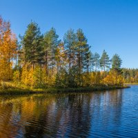 Осень :: Наталья Шкаева