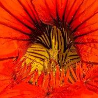 Чрево цветка :: Владимир Шамота