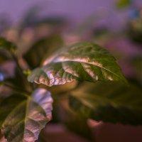 Комнатное растение :: Виталий Шабанов