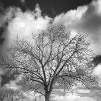 Одинокое дерево 3 :: Viacheslav