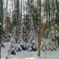 Зимой в лесу. :: Галина .