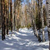 Весенний лес :: Denis Avramchuk