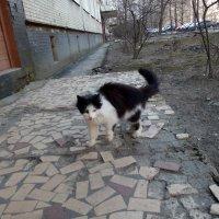 Фотосессия кошки :: Михаил Нименский