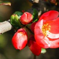 Весна :: Сергей Форос