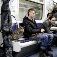 необычный пассажир :: navalon M