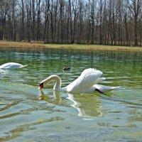 Синхронное плавание...))) :: Galina Dzubina