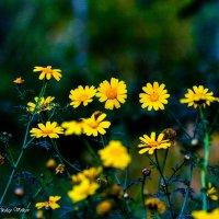 Весенние краски :: Николай Волков
