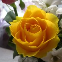 Солнечная роза :: Елена Семигина