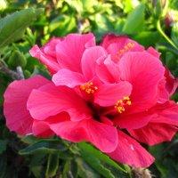 Мои любимые цветы :: Lukum