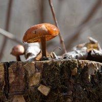 Первый гриб этого года... :: Наталья Костенко