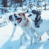 Собачье счастье :: Юрий ефимов