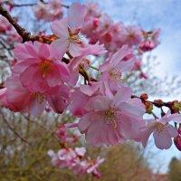 """""""Вот, опять буйным цветом сады закипели. И поплыл над землёю цветов аромат."""".. :: Galina Dzubina"""