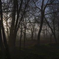 Сказочное утро :: Sergey Kuznetcov