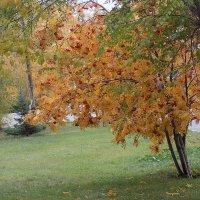 Осень :: Максим Мальцев