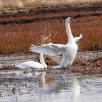 А мне летаааать.. охота... :: Антонина Гугаева