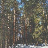 дорога в лес :: Валерия Клюкина