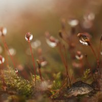 Весна :: Александр Зенкин