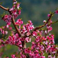 vit5  цветущие долины :: Vitaly Faiv