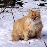ИСПУГАННЫЙ  КОТ :: Анатолий Бугаев