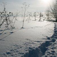 Солнечно... :: Sergey Apinis